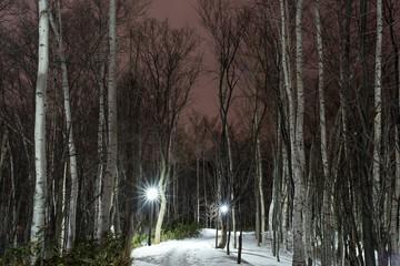 夜の白樺の木