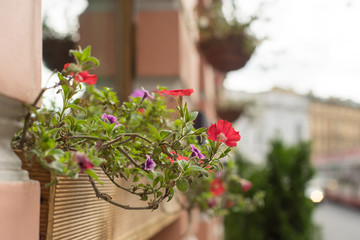 An outside basket filled with vibrant redpetunias