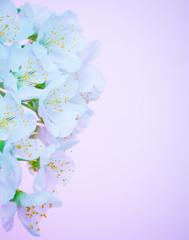 Beautiful blooming flowers border