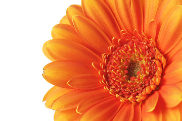 Autocollant pour porte Gerbera Orange gerbera flower on a white background