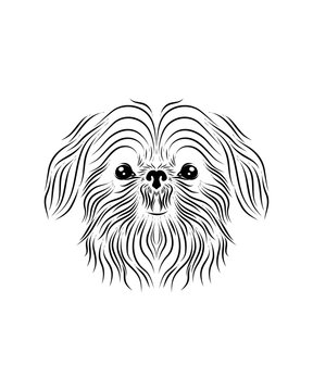 Shih Tzu dog line art, tribal. Freehand vector illustration.