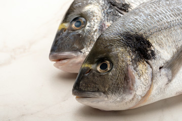 Two fresh raw dorada fishes on the bright background.