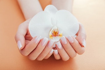 Ombre french manicure with orchid on orange background. Woman with white ombre french manicure...