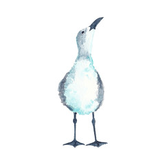 Watercolor illustration of seagull bird looking up