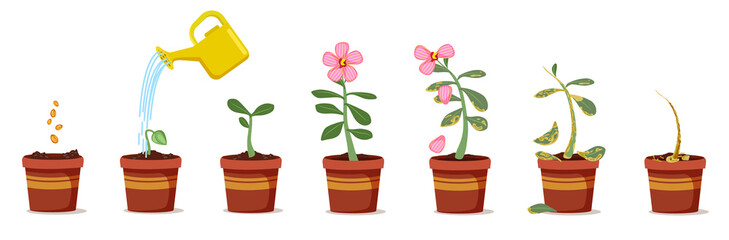 Plant growing stages. Green flower in pots vector illustration