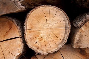 Kesilmiş ağaç dokusu, çatlak.