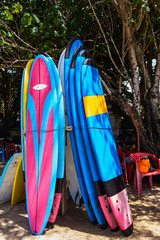 Surfing boards standing on the beach