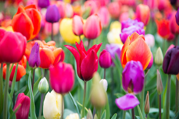 Blooming flowers in park. Netherlands, Europe.