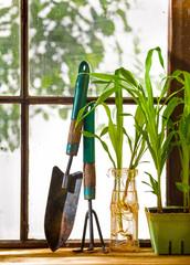 Still Life of Garden Tools