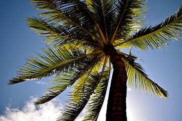 Palm trees a widely known symbol for relaxation and tropical vacation.