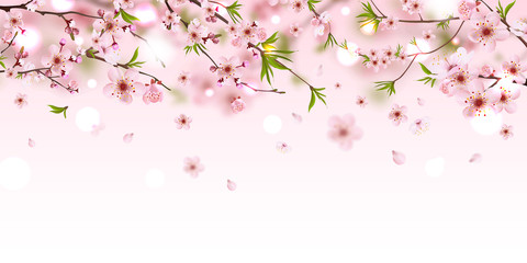 Blooming branch chinese cherry background with falling petals, spring vector illustration