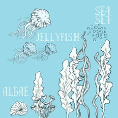 Hand drawn alga vector set