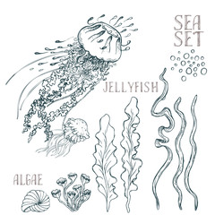 Hand drawn alga vector set on white background