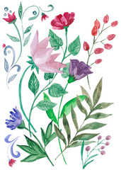 акварельные цветы. Ботаническая иллюстрация. Набор цветов и растений, Букет из красных, розовых и фиолетовых цветов