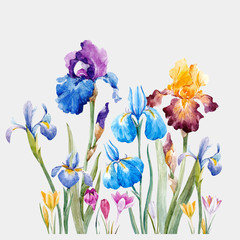 Watercolor iris vector composition