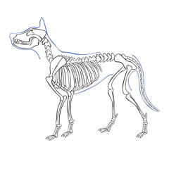 Dog skeleton. Isolated vector object on white background.