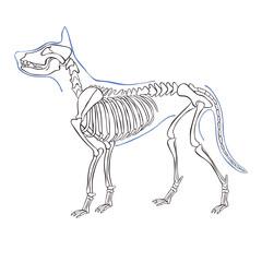 Dog skeleton. Isolated vector object on white background.