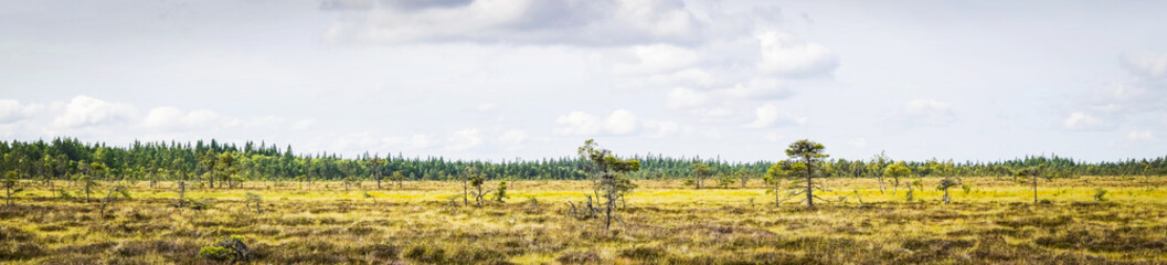 Dry plains with pine trees in a panorama