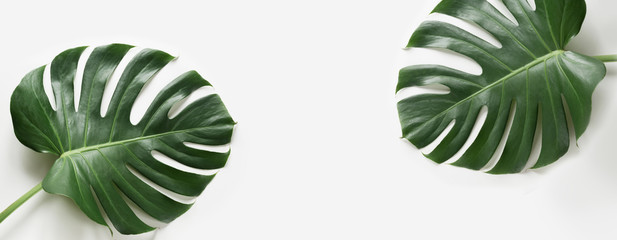 Wall Murals Plant Monstera leaves plant on white background. Isolated with copy space. Banner.