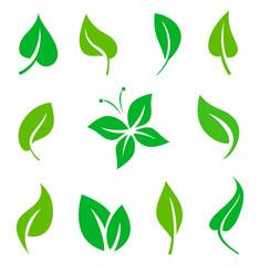 Set of green leaves design elements.