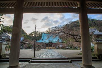 鎌倉のさくら