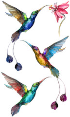 Beautiful colorful flying hummingbirds isolated on white background. Collection of exotic tropical birds with vivid feathering and long beaks and tails. Watecolor painting. Hand drawn