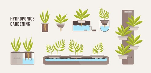 Collection of green plants growing in pots with mineral nutrient solution. Bundle of cross sections of hydroponic gardening systems isolated on light background. Vector illustration in flat style.