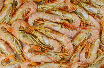 Shrimp background.