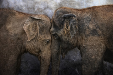 Foto op Canvas Olifant I love You