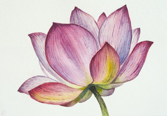 Lotus flower watercolor