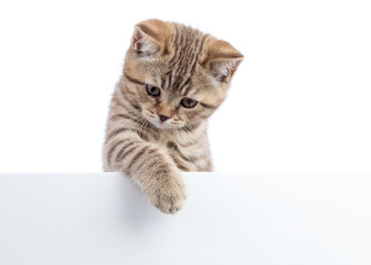 Cat kitten hanging over blank posterboard, isolated on white