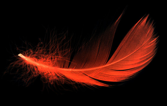 Red feather on a black background