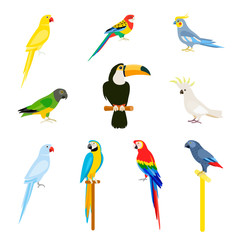 A set of birds in a flat style.