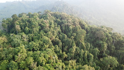 Rainforest. Aerial landscape