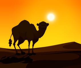Camel standing on desert land at sunset
