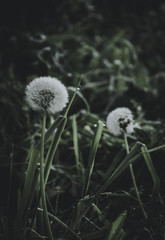 naturaleza #18