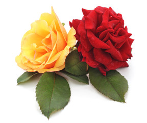 Red and yellow roses.