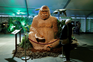 A visitor looks at a chocolate sculpture of a gorilla during the chocolate sculpture festival in Durbuy