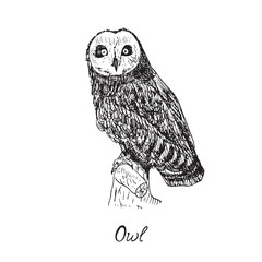 Owl sitting on branch and looking forward, hand drawn doodle, sketch in pop art style, vector illustration with inscription