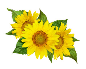 Yellow sunflowers and green leaves in floral arrangement