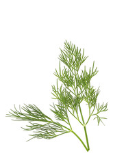 Fresh dill on white background with space for text. Top view.