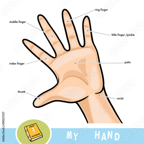 Common names for fingers of hand. Cartoon picture about human body ...
