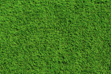 Bright green grass background, lawn for football