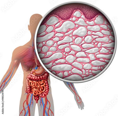 Interstitium Human Body Anatomy\