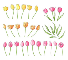 Collection of hand drawn vector tulips isolated on white. Floral set for spring design