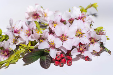 Spring flowers from trees