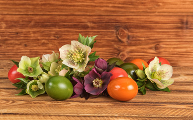 Rustic Easter still life. Easter eggs, blossoms of lenten rose Hellebore flowers on old wooden background.