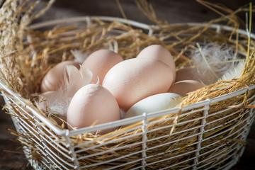 Closeup of free range eggs in the hen nest