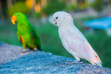 Parrot, lovely bird, animal and pet at the natural park