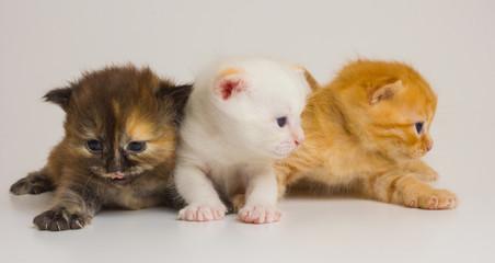just new born  kitten